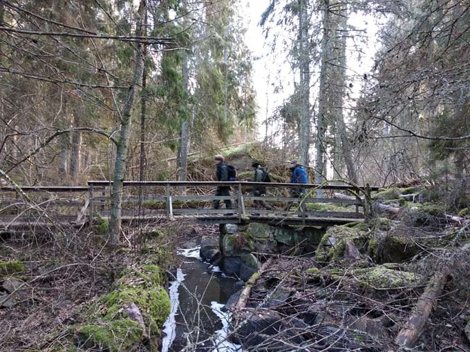 Nordic Resistance Movement members on a walking tour in Swedish woodland
