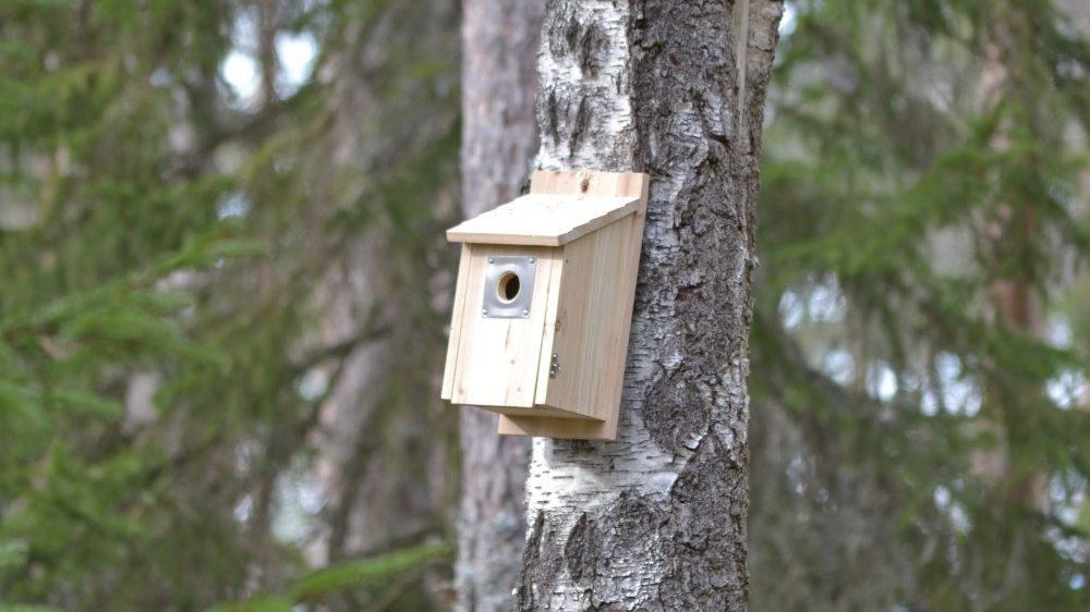 A birdbox on a tree in a Swedish forest