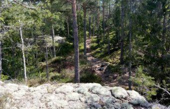 Swedish forest near Stockholm