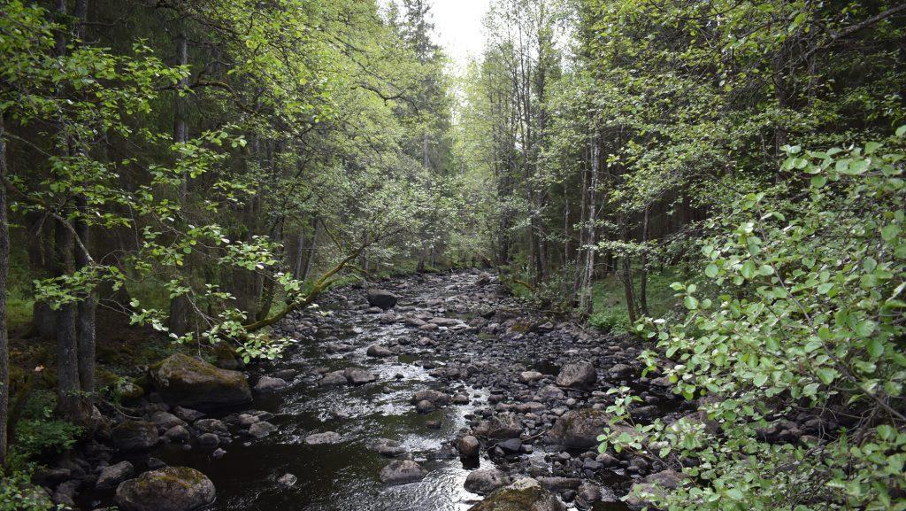 Swedish river in woodland