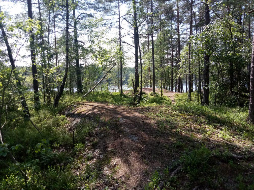 Swedish woodland