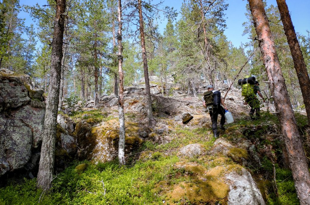 Wilderness hike in northern Swedish forest