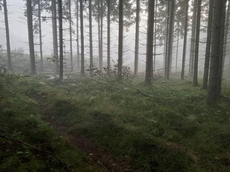 Bohusleden forest